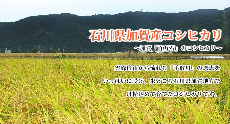 石川県加賀産コシヒカリ